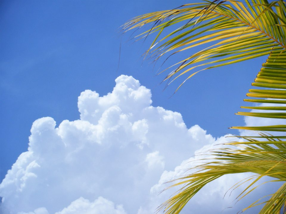 Blick in den Himmel über Arubar