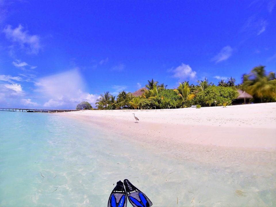 Strand mit Flossen