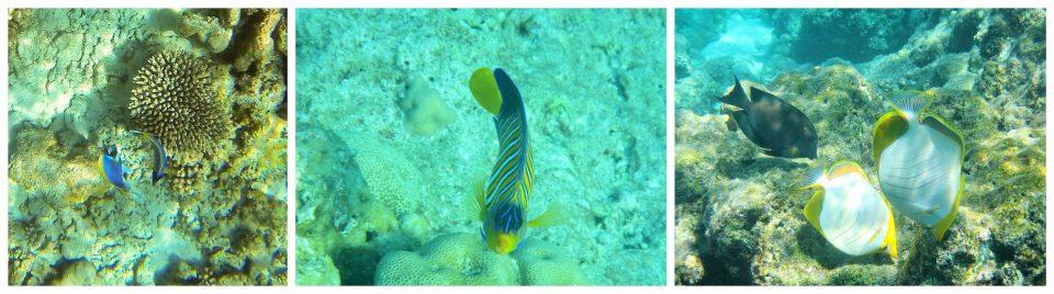 tanzende Fische Malediven schnorcheln