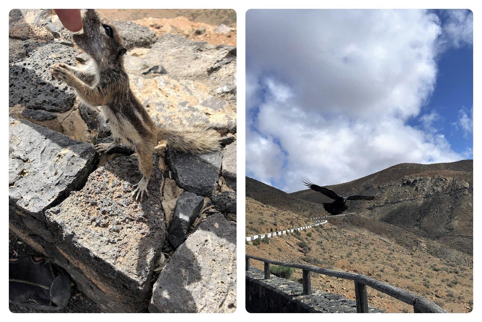 Tiere auf dem Aussichtspunkt